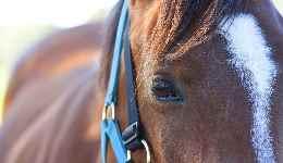 Lindy Farms - News 1