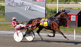 Plainridge harness racing news archives lindy farms